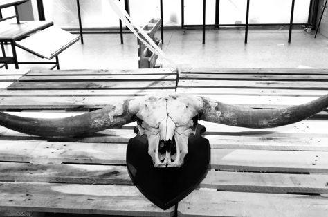 Brutus the bull