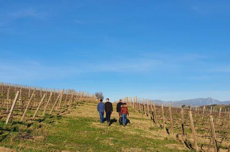 Wandelen tussen wijnranken