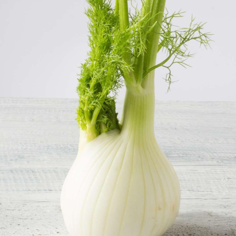 Fresh organic fennel wooden white table
