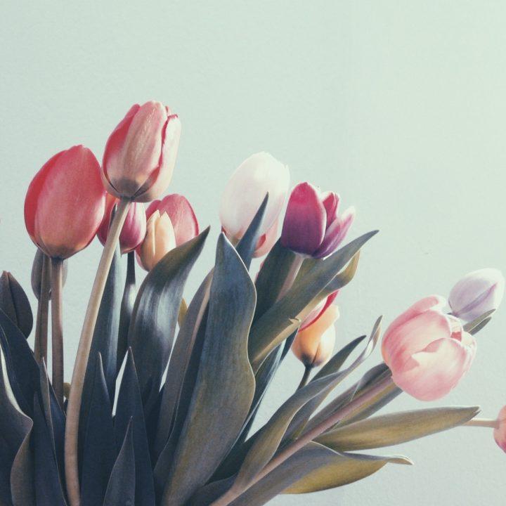 Tulips 2